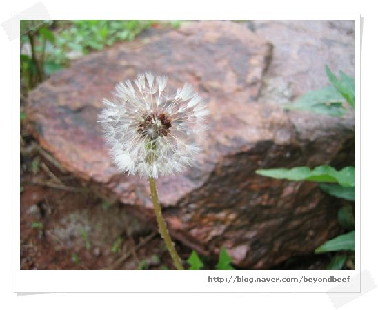 050511-scenery_of_spring_070_1.jpg